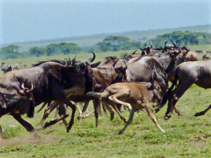 img-CDCV-la Tanzanie27